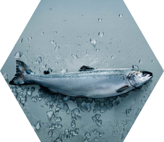 QRILL Aqua - the aquaculture ingredient from Aker BioMarine