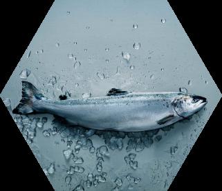 Qrill Aqua for fish