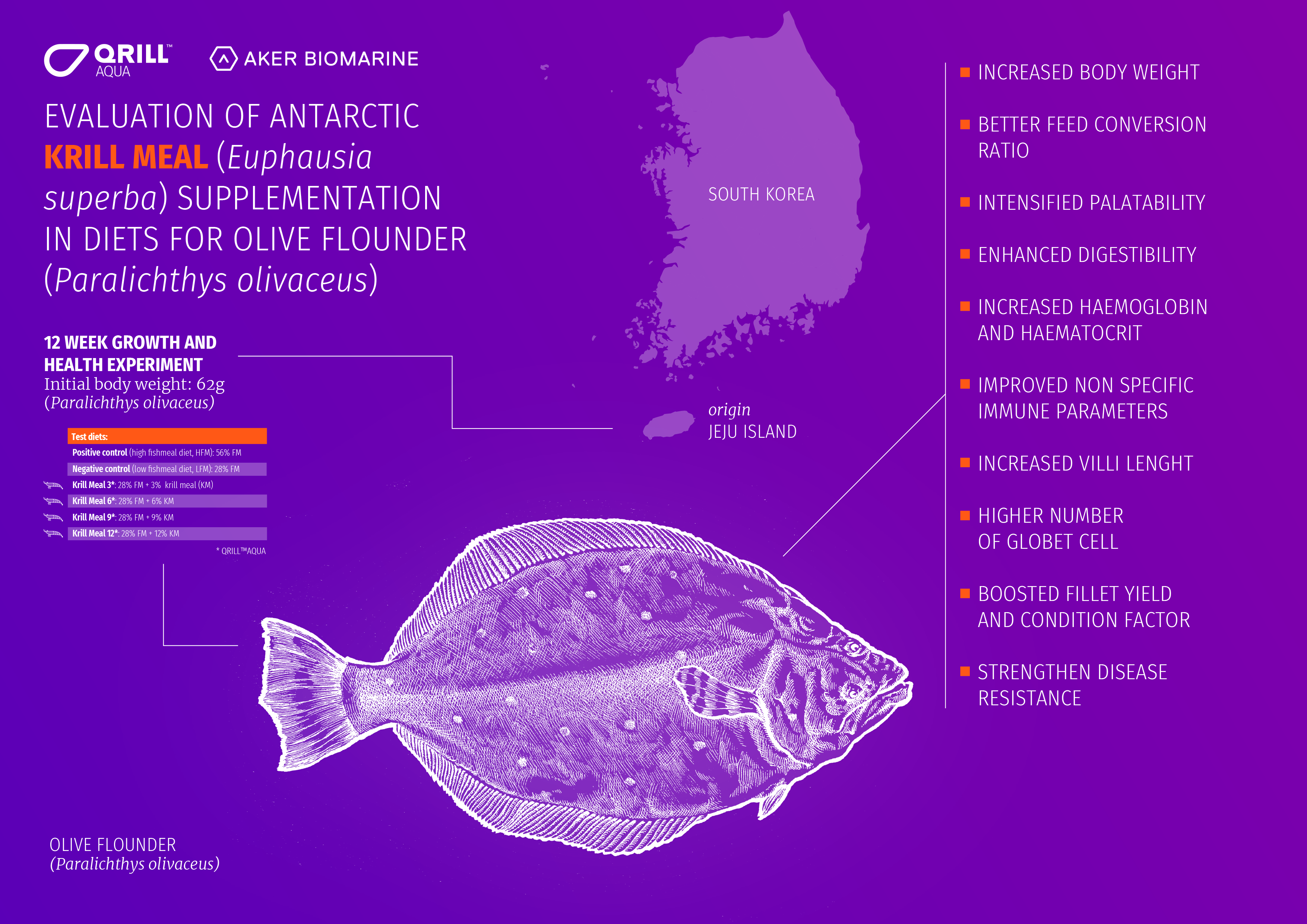 Olive flounder study overview infographic