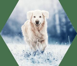 QRILL Pet - hexagon