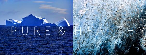 Superba-iceberg-krill-header