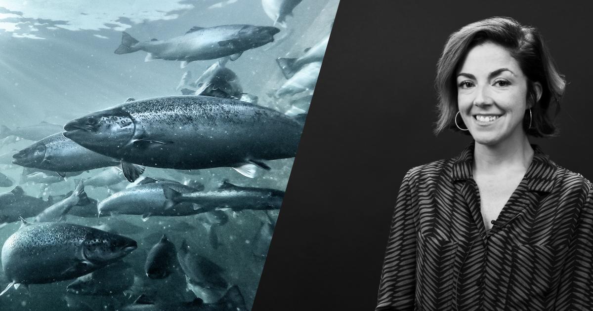 Krill i laksefôr bedrer fiskehelse og filetkvalitet